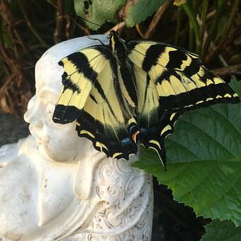 Butterfly, Buddha, Nature, Buddhism, Relaxation, Wings