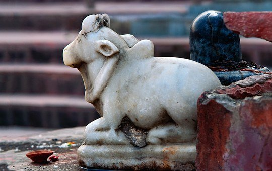 Murti, India, Travel, Asia, Holy, Cow, Hindu, Faith