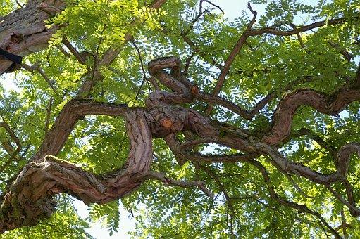 Tree, Log, Bark, Tribe, Nature, Wood, Forest, Cracked