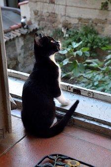 Cat, Window, Cats, To Watch, Nero, White, Pet