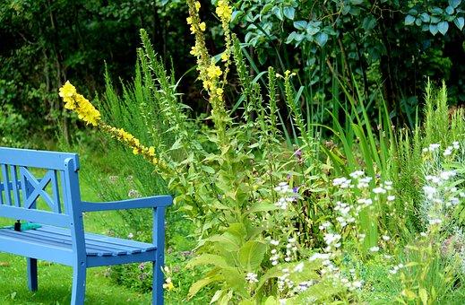 Garden Bench, Garden Pond, Plant, Oasis, Rest