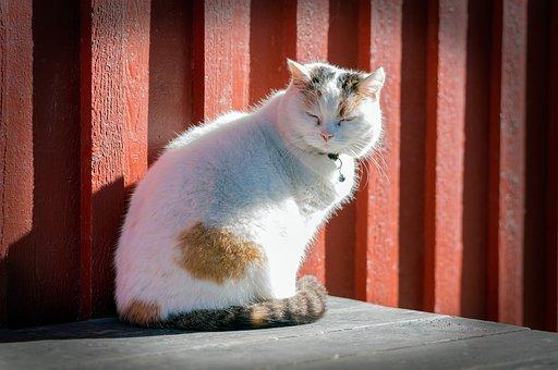 Cat, Kitten, Animal, White, Sitting, Pet, Fur, Cute