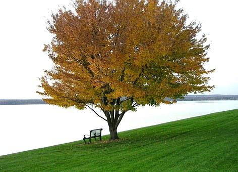 Tranquil, Autumn, Scene, Water, Tree, Contemplate