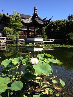 Temple, Lotus, Zen, Basin, Japanese Garden, Asia, Green