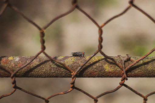 Fly, Grid, Nature, Insect, Wings, Spring, Wild