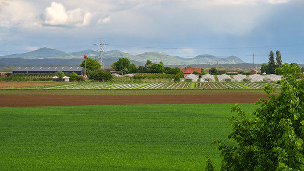 Field, Agriculture, Mountains, Nursery, Fruit Growing