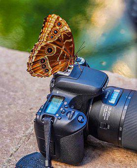 Camera, Butterfly, Nature, Photo