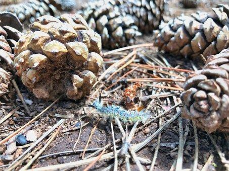 Caterpillar, Pine, Cones, Nature, Forest