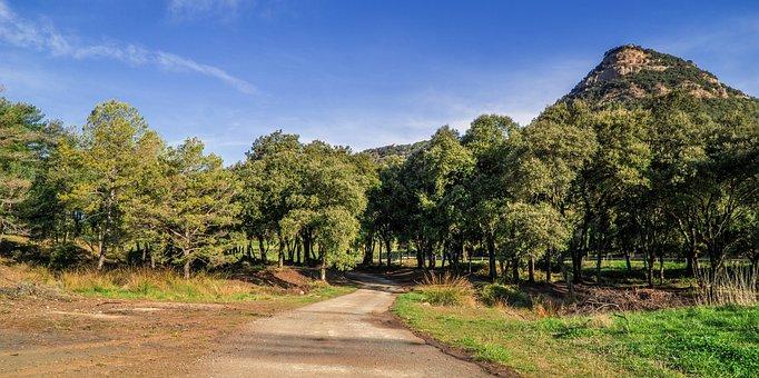Rural Tourism, Catalunya, Nature, Landscapes, Forest