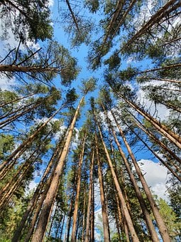 Forest, Pine, Stroll, Sky, Sun, Weekend, Sunday, Summer