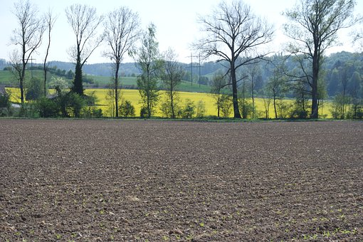 Zurich, Uitikon-waldegg, Arable, Oilseed Rape