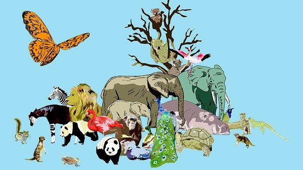 Zoo, Animals, Peacock, Lion, Hippo