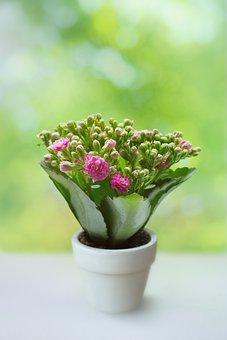 Spring, Summer, Plant, Petals, Buds