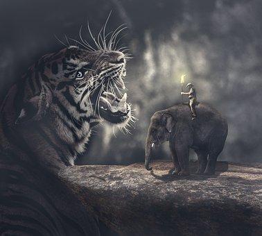 Tiger, Elephant, Warm Mood, Hd Wallpaper, Darkness
