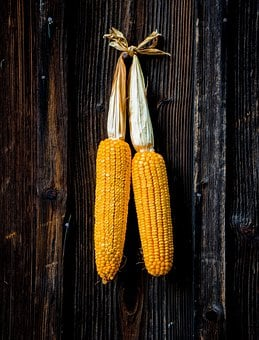 Corn, Grain, Cereals, Agriculture
