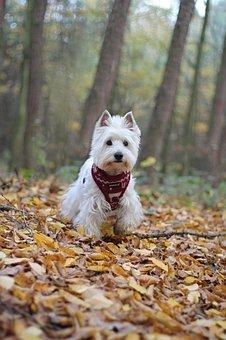Dog, Autumn, White, Nature, Outdoor, Foliage, Trees