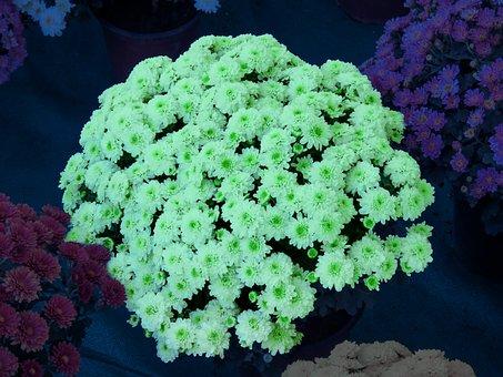 White Glow, Bouquet, Chamanti, Chamanti Flowers