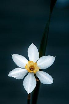 Summer, Garden, Flower, Daffodil, One
