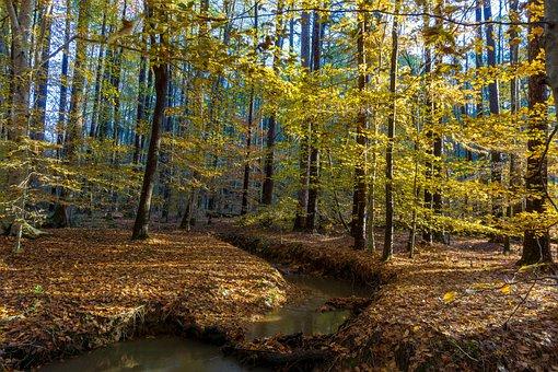 Fall, Autumn Stream, Stream, Autumn, Nature, Landscape