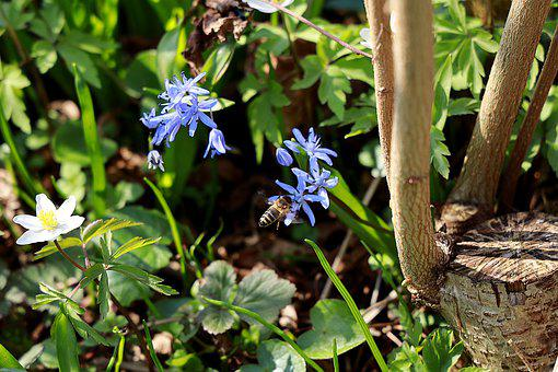 Butterfly Orchid, Bee, Spring Flower, Bluebell, Spring