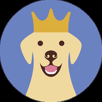 Labrador, Dog, Animal, Pet, Adorable, Friendly, Crown
