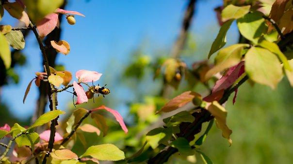 Bee, Leaves, Tree, Trunk, Stem, Green, Yellow, Orange