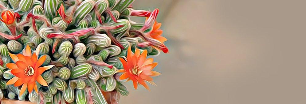 Banner, Digital, Graphics, Plant, Cactus, Mediterranean
