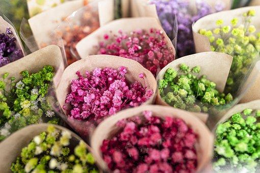Flowers, Gypsophila Elegans, Admission, Ornament
