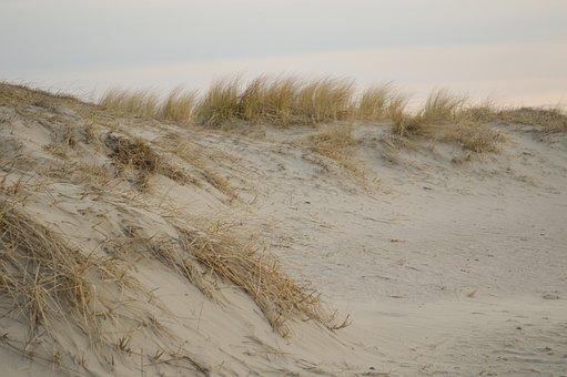 Sand, Beach, Dunes, Plant, North Sea, Nordfriesland