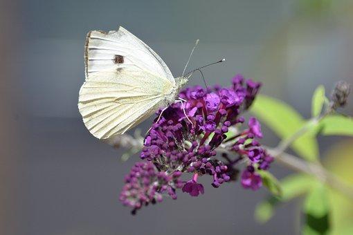 Butterfly, Tigerprint, Bug, Animal, Butterfly Park