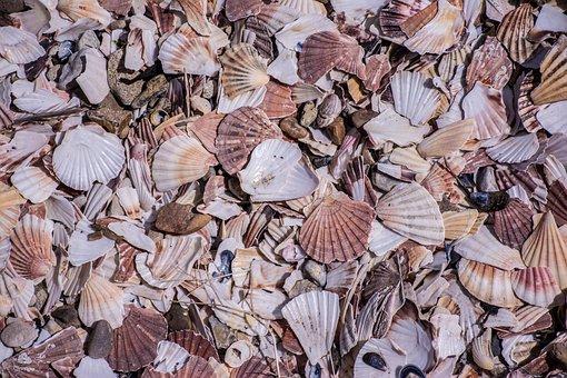 Mussels, Beach, Coast, Nature, Flotsam, North Sea