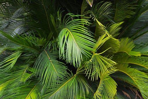 Palm Leaf, Ferns, Fronds, Jungle, Plant, Green, Botany