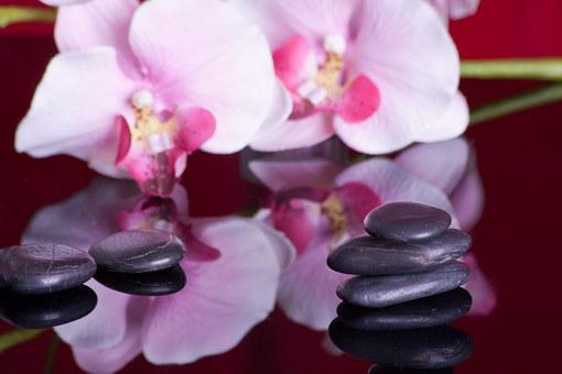Massage, Mirroring, Orchid, Recovery, Relaxation