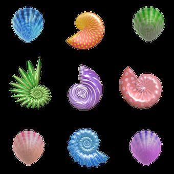 Shell, Seashell, Nautilus, Clam, Barnacles, Mollusk