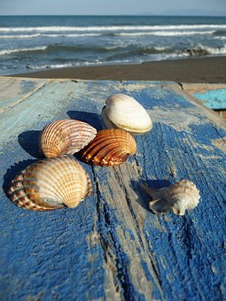 Sea, Mussels, Mussel Shells, Holiday, Flotsam