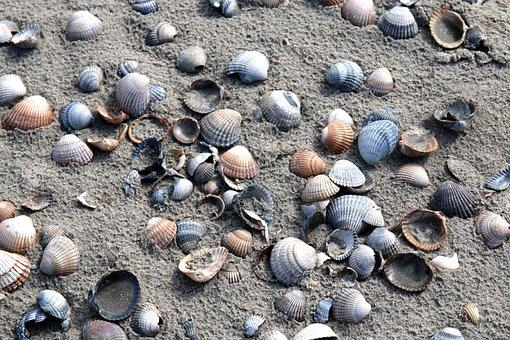 Mussels, Cockle, Mussel, Nature, Beach, Coast, Close