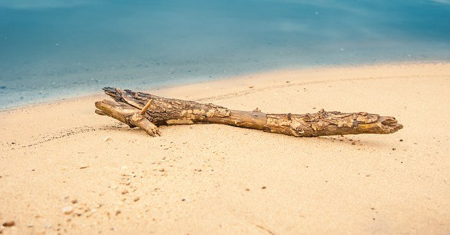 Drift Wood, Flotsam, Beach, Water, Sand, Sand Beach