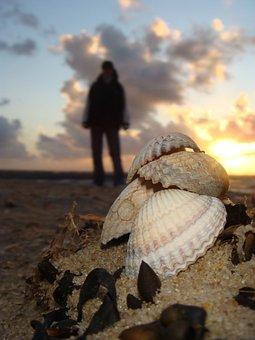 Mussels, Sea, Sand, Mussel Shells, Sand Beach, Flotsam