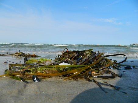 Tang, Beach, Sea, Coast, Wave, Flotsam, Seaweed