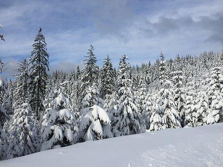 Winter, Snow, Wisla, Forest, Evergreen