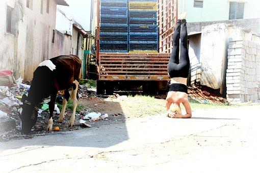 Headstand, Sirsasana, Yoga, Ashtanga, India, Fitness