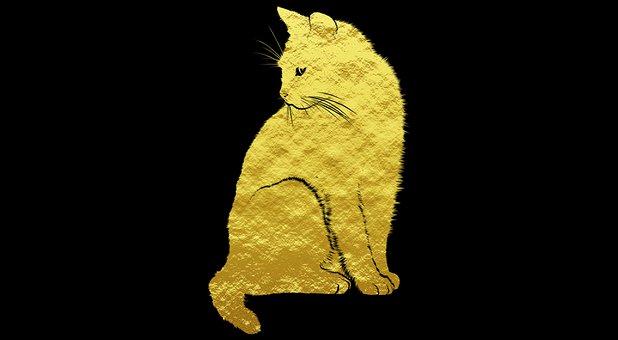 Cat, Kitten, Golden, Glitter, Golden Cat, Pet, Animal