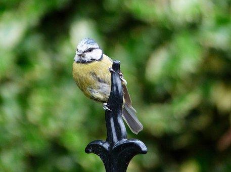 Bird, Garden Birds, Nature, Plumage, Feathers, Garden