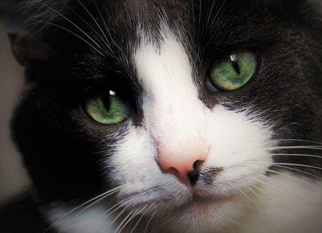 Black Cat, Melancholia, Kitty, Tomcat