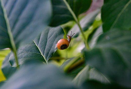 Snail, Tree, Leaves, Mollusk, Nature, Probe, Crawl
