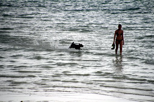 Go Out For A Walk By The Sea, Dog And Woman