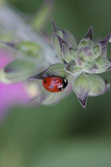 Ladybug, Flower, Thistle, Spring