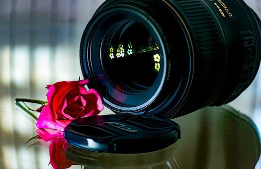 Lense, Glass, Lenses, Optical, Magnify, Focus, Rose