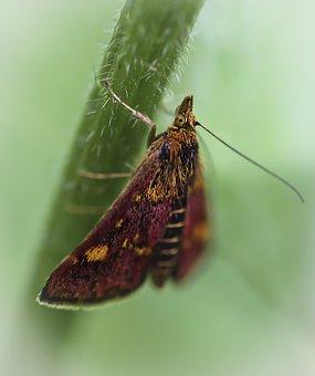 Butterfly, A Moth, Mols, Butterflies
