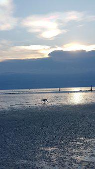 Dog On Beach, Sun, Clouds, Beach, Dog, Sea, Ebb